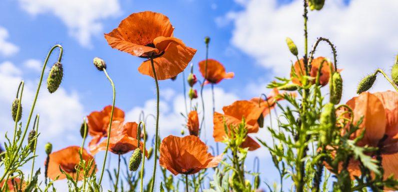 Znaczenie kwiatów